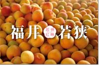 梅果汁商品販売